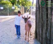 parco_naturale_cervia_capriolo