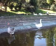 parco_centrale_del_lago_eur_anatre