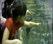 acquario_di_bolsena_bambini