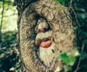 parco_divertimenti_giocabosco_alberi