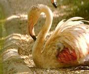 parco-zoo-falconara_fenicotteri