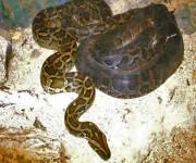 parco-zoo-falconara_serpenti