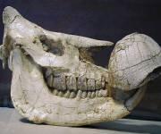 parco_le_pietre_del_drago_museo_fossili