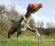 parco_le_pietre_del_drago_velociraptor