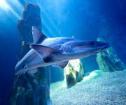 acquario-cala-gonone-squali