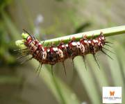 casa-delle-farfalle-monteserra-bruco