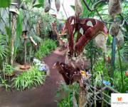 casa-delle-farfalle-monteserra-serra