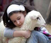 parco_divertimento_citta_della_domenica_contatto_animali